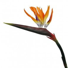Birds Of Paradise Orange Faux Plant